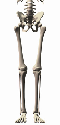 skeleton-leg-alignment.jpg